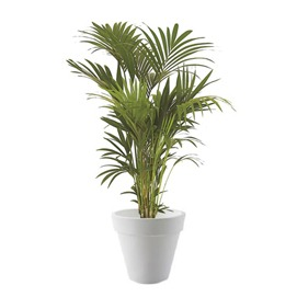 location-plante-naturelle-evenement-paris-lille-kentia-1