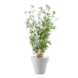location-plante-naturelle-evenement-paris-lille-bambou-1