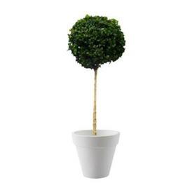 location-plante-naturelle-evenement-paris-lille-buistige-1